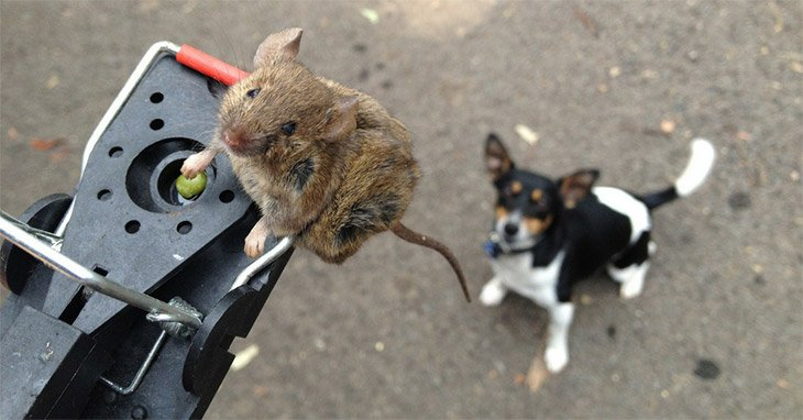 how to clean up mice poop from a camper