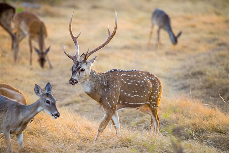 1. Deer Hunting -Dallas, Texas