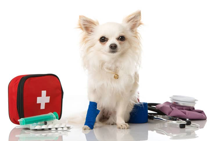 Pack Up For Some Pest Protection And Dog First Aid Kits​