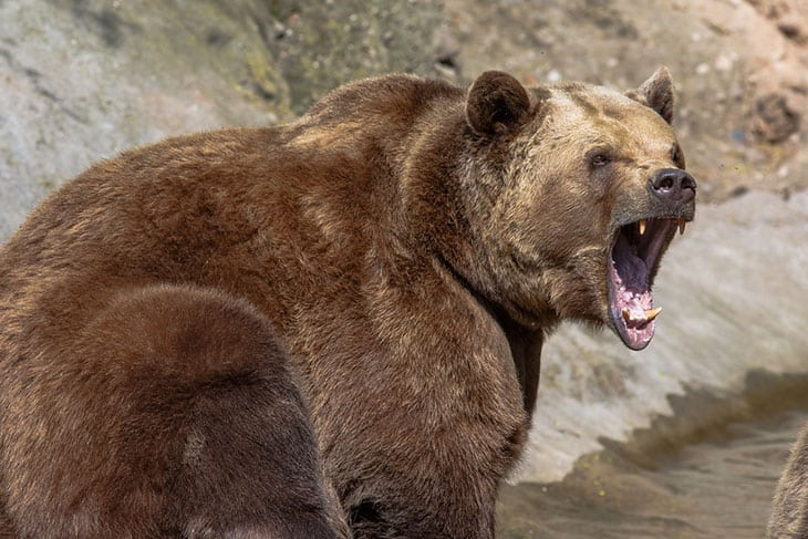 How Can Bear Sprays Fend Off Bears