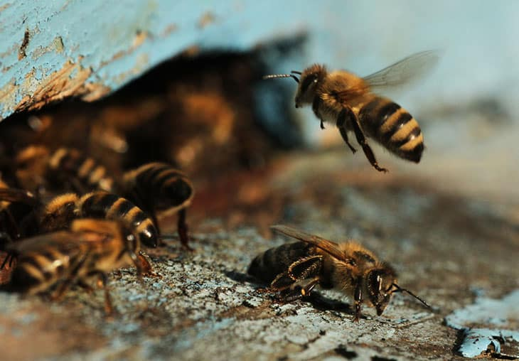 4 Tricks to Keep Bees Away From Your Campsite